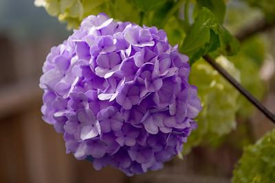 Botany of Desire